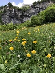From Leukerbad to Varen (Rosmarie Voegtli) Tags: sooc hiking summer sommerwiese meadow wasserfall cascade flowers kulturweg leukerbad