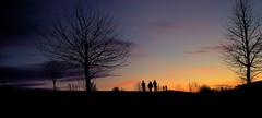 Abendspaziergang in Karlsruhe (MHikeBike) Tags: landschaft abend sonnenuntergang sunset farbig himmel büsche wald landscape eve coloured sky