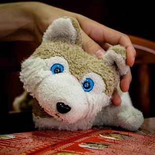 Wolfi stöbert in der Speisekarte