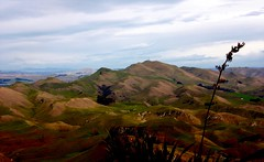 North (moi moi nz) Tags: northisland newzealand havelocknorth