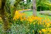 Eden (David Allen's Photostream) Tags: eden garden gardens flowers pretty fuji x100t colourful