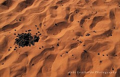 EL RETO de junio: HUELLAS -quien ha venido de aqui´? (gabi lombardo) Tags: sabbia deserto tracce huellas sand wüste spuren arena desierto sable estiercol sterco shit desert excrement traces