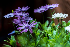 Flower (stephanrudolph) Tags: d750 nikon handheld london uk gb england europe europa 70200mm 70200mmvr 70200mmf28gvr flower plant
