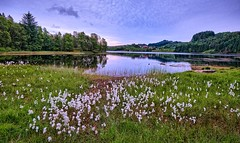 The lake is drying up, Norway (Vest der ute) Tags: xt2 norway rogaland haugesund eivindsvatnet water waterscape landscape lake reflections flowers weed trees tree houses forest rocks evening summer sky fav25 fag200