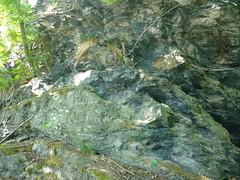 Mochowskie Wzgórze (nesihonsu) Tags: mochowskiewzgórze mochenstein geology geologia geologiapolski góry geotourism geoturystyka geologyofpoland rocks rock hill kaczawafoothills pogórzekaczawskie sudety sudetes sudeten natureofpoland nature poland polska lowersilesia dolnyśląsk dolnośląskie paleozoic skały skała forest foothills pogórze mountains rocksintheforest fyllit fyllity phyllite metamorfikkaczawski metamorphic