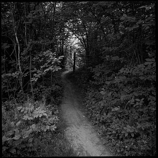 Forest path III