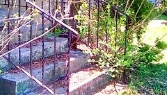 Springtime stairs - SFS (Maenette1) Tags: springtime stairs leaves neighborhood menominee uppermichigan saturdayforstairs flicker365 allthingsmichigan absolutemichigan projectmichigan