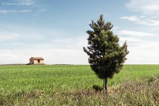 Elogio de la paisajística sencillez / In praise of landscape simplicity.
