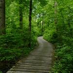 Boardwalk trail thumbnail