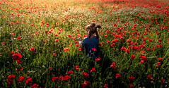 Because I'm poppy (Bai R.) Tags: poppy poppies red flowers joy happy happiness girl child childhood children nature sunset