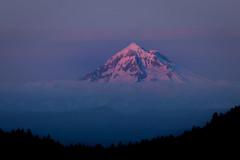 "Alpenglow on Mt Hood (Catherine ""Cat"" Rose) Tags: 2018 may powellbutte mt hood alpenglow"