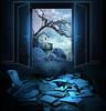 Night rain (jaci XIII) Tags: noitedechuva terror casa pássaro ave corvo chuva pedra papel livros nightofrain house bird crow rain stone paper books
