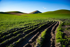 A Fleeting View of Steptoe Butte (BikeColorado) Tags: farming plowed wheat steptoe butte washington