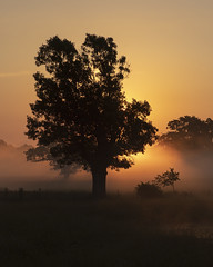 Sunrise at Lowery, Oklahoma (Mitch Tillison Photography) Tags: sunrise golden mist fog silhouette country landscape orange field pasture peaceful bucolic colorful nikon d5 mitchtillison photo photography tokijna atx pro 100