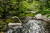 Going up the river (danilocolombo69) Tags: river trees wild forest water wood rocks landscape grass leaves danilocolombo danilocolombo69 nikonclubit greatphotographers