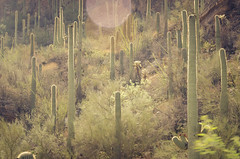 Rain in Tucson or just after, Sabino Canyon (Nobiefromcg) Tags: tucson rain arizona az monsoon nikon d7000 sabino canyon desert saguaro