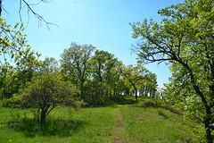 Park-type oakery (МирославСтаменов) Tags: russia zhiguli oakery mogutova forest oak tree glade path meadow edge
