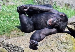 Yoga für Affen