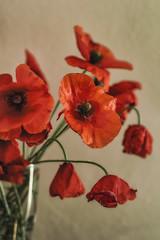 Amapolas (cruzjimnezgmez) Tags: silvestres ramo rojo amapolas flores