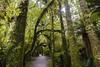 El bosque. (Victoria.....a secas.) Tags: nuevazelanda islasur bosque