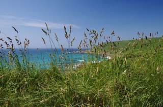 Seaside grass