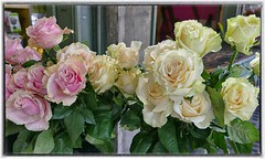 For 3 generations of Gemini (steckphotos) Tags: roses pink white yellow gemini seattle pike place market june