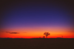 Dusk (Marc Braner) Tags: ifttt 500px rhinelandpalatinate worms germany europe outdoors sky old town landmark cultivated land agriculture backlit farm rural sunset sun dramatic moody dusk twilight horizon over sunbeam mist rheinhessen fields landscape tree