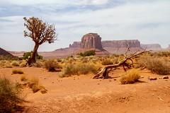 Desert (Karen_Chappell) Tags: usa utah travel landscape scenery scenic monumentvalley desert orange blue tree sand sandstone rocks rock navajo green sky clouds