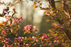 Framing Spring (Karl's Gal) Tags: blossoms spring crabappleblossoms karlsgal