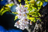 Pink against the sun (Sean X. Liu) Tags: flower closeup macro macromademoiselle highpark toronto ontario canada