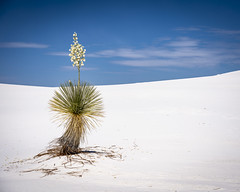 White Sands (Mobilus In Mobili) Tags: newmexico interesting mobilusinmobili creativecommons