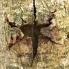 (hannemiriam) Tags: aarhus marselisborgskov denmark danmark bark lookinside forest upclose wood tree abstract nature iphone