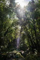 This beam of light (Tiomax80) Tags: beam light tiomax 500px flickr instagram tiomax80 ig nice best top ray trees sun sunlight sunray tree sunshine jungle nature outdoors hiking bassinparadise uga uwa gourbeyre basseterre guadeloupe gwada river rocks flora forest rainforest natural nofilter nikon d610