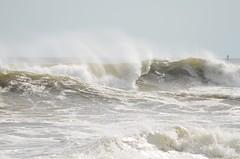 DSC_9644 (padraicsmeehan) Tags: beach sunandsurf sand birds coast longisland atlanticbeach ny newyork unitedstates usa america beachclub shorebirds coastal southshore waves crashing ocean atlanticocean