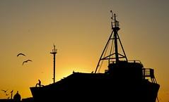 The Boat (Alex L'aventurier,) Tags: essaouira maroc morocco sunset coucherdesoleil orange bateau boat harbor harbour port silhouette sky person oiseaux birds seagulls travel holidays pêcheur fisherman