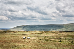 Sheep On The Dales (jamesromanl17) Tags: landscape landscapes canon eos 5d yorkshire dales nationalpark england britain countryside clouds cloud cloudscape cloudy sheep mountain buckden field fields sky skies animal farm farming farmland fence light summer