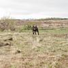 Hólabergs Kilja Labrador Retriever (olikristinn) Tags: 03062018 2018 heiðmörk hraunhóll hólmsá hólmurinn iceland june june2018 kilja labrador labradorretriever reykjavik reykjavík reykjavíkdog suðurá chocolatelab chocolatelabrador hundur hvolpur puppy hólabergskilja fieldlabrador 1012months americantype hvolpalífið dog