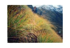 Tussock detail arrives into view... (jasoux) Tags: mountain tussock tramping arthurspass newzealand nz mountains alpine valley ridge outdoors wilderness trek hike hiking backpack bush bushwalk climbing mingha minghariver arthurspassnationalpark goatpass templecol