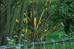 J78A1141 (M0JRA) Tags: birds flight flying wildlife rats walks gardens parks fields trees lakes ponds ducks swans rspb