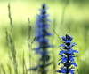 _5280263 (Vladimir Gazoukin) Tags: canada country close flowers vladimirgazoukin spring barrie bokeh backyard