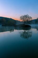 Arbre perdu sur son étang (grenwald) Tags: panorama paysage arbre automne brume contrejour eau etang lever de soleil leverdesoleil