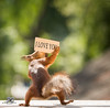 red squirrel is holding a i love you sign (Geert Weggen) Tags: animal anniversary birthday celebration cheerful closeup colorimage cute food iloveyou joy looking loveemotion mammal nature newlife nopeople partysocialevent photography postcard reaching red relaxation rodent seat singleobject squirrel sweden text valentinesdayholiday flower humor beauty tender hold carry mothersday happy mother passion bispgården jämtland geert weggen ragunda