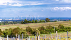 Wine and wind... (.: mike | MKvip Beauty :.) Tags: sony⍺7markiii sony⍺7iii sonyilce7m3 sonyalpha7m3 sonyalpha sony alpha emount ⍺7iii ilce7m3 ef1004004556lisiiusm canon canonl 100400mm ii is usm telezoom metabonesefemounttsmart metabonesmarkv metabones efe eftoemount manualexposure manual handheld availablelight nature windfarm windpark spring ilbesheim kalmit kleinekalmit germany europe mth mkvip canonef100~400mmƒ45~56lisiiusm metabonesefemounttsmartadaptermarkv