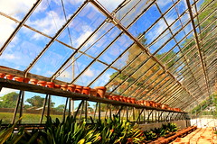 The Hot House (acwills2014) Tags: hot greenhouse glasshouse reflections sky glass pipes plants building structure lines diagonals depth horticultural bluesky light colours windows panes pottingshed tyntesfieldhouse nationaltrust
