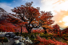 Awesome Paths (Valter Patrial) Tags: awesome trees tree land red fox orange autumn rural scene scenery landscape lush foliage countryside footpath idyllic scenic copse grass boulevard seasons fall winter inexplore