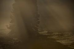 Drapé d'un rideau de brumes (Samuel Raison) Tags: arbre leverdesoleil lumière light ombre shadows shadow hautsplateauxduvercors vercors ambiance mist misty brumes brume brouillard nikon nikond800 nikon4200400mmafsgvr