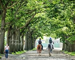 Clement Team at Belmont Park (EASY GOER) Tags: horseracing horses equine thoroughbred sport belmontpark