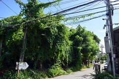 vines (the foreign photographer - ฝรั่งถ่) Tags: our street wires overgrown vines two men electric company bangkhen bangkok thailand nikon d3200