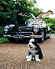 Puppy x Gullwing (Alex Penfold) Tags: black white mercedes 300sl gullwing alex penfold 2018 classic car cars dog dogs puppies puppy