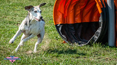 _DSC0245 (SeverX9) Tags: sony alpha 6500 70200gf4 dog run